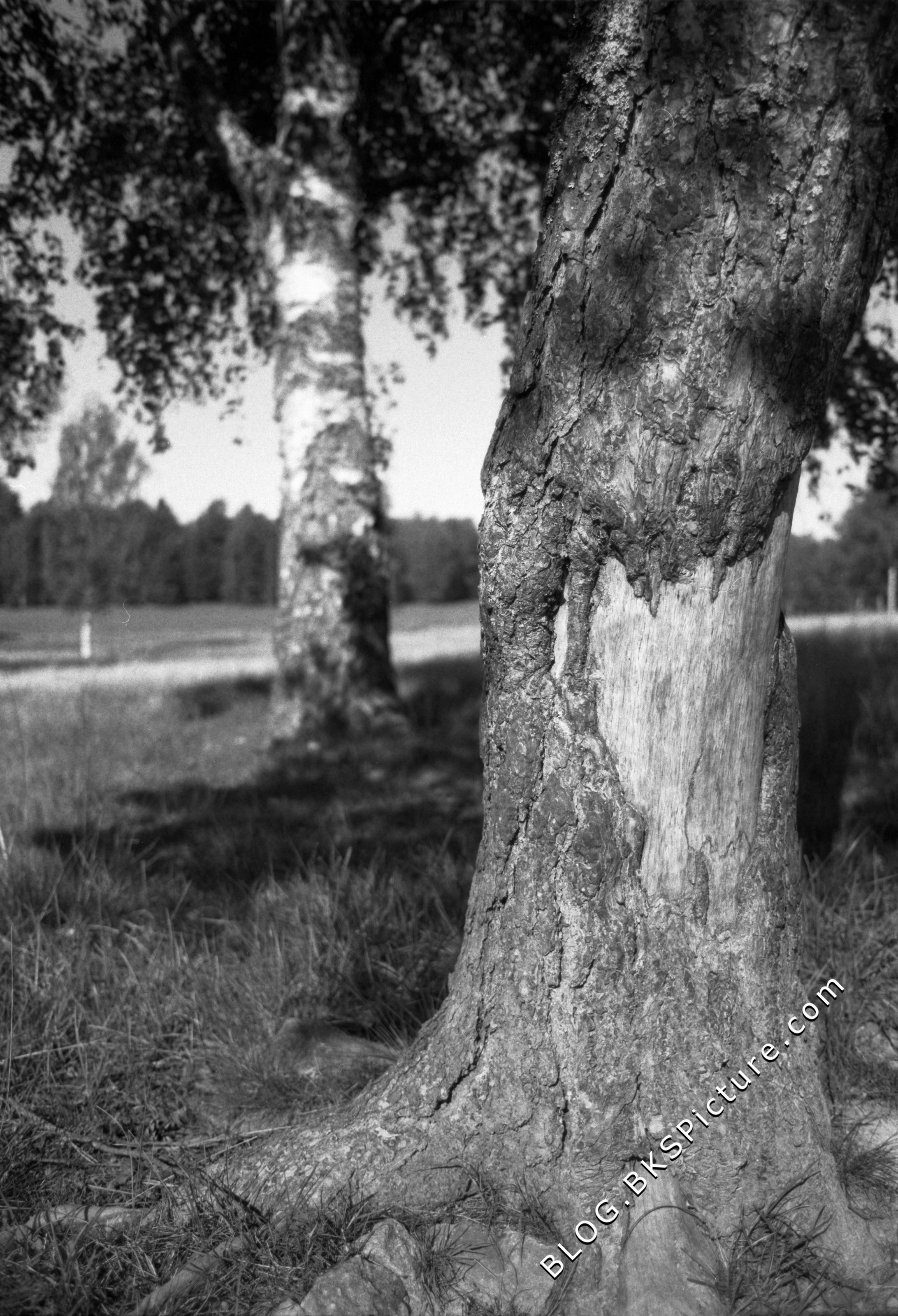 Nikon NIKKOR 28mm f/2 8 ai Review © blog bkspicture com